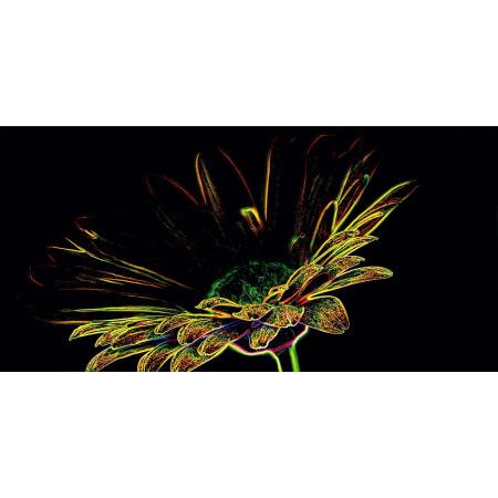 Opoczno Fluorescent Flower Yellow Inserto Listwa dekoracyjna szklana 29,7x60x0,9 cm, czarna, żółta błyszcząca OD386-001